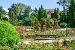 Groen milieu op rozengebied in Iasi stock fotografie