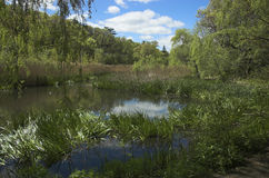 Groen moerasland Stock Foto
