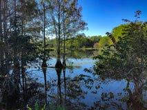 Groen moeraslandschap royalty-vrije stock afbeeldingen