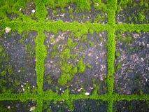 Groen Mos royalty-vrije stock foto