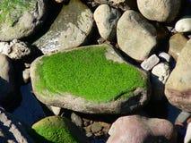 Groen mos Stock Foto's