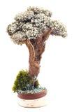 Groen Mos Stock Afbeelding