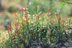 groen mos bij bos royalty-vrije stock fotografie