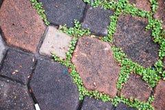 Groen mos bij het bedekken van de achtergrond van de het voetpadtextuur van de bakstenensteen royalty-vrije stock foto