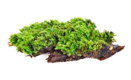 Groen mos dat op wit wordt geïsoleerd stock afbeelding