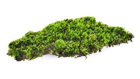Groen mos dat op wit wordt geïsoleerd royalty-vrije stock foto's