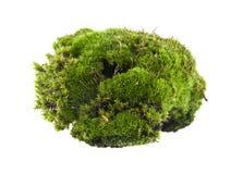 Groen mos dat op wit wordt geïsoleerd stock afbeeldingen
