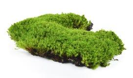 Groen Mos dat op Witte Achtergrond wordt geïsoleerdo royalty-vrije stock foto's