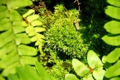 Groen mos dat stokken aan een boom stock afbeeldingen