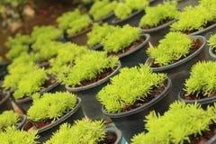 Groen mos in de aard bij het bos Stock Foto's