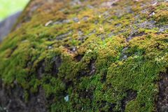 Groen mos in de tuin royalty-vrije stock foto's