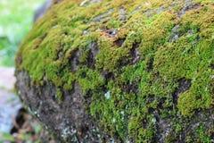 Groen mos in de tuin royalty-vrije stock afbeelding