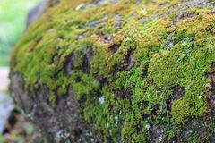 Groen mos in de tuin stock foto