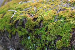 Groen mos in de tuin royalty-vrije stock fotografie