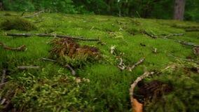 Groen mos in het bos stock video