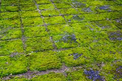 Groen mos in lannatempel royalty-vrije stock fotografie