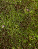 Groen mos op baksteen Royalty-vrije Stock Foto