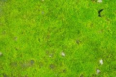 Groen mos op concrete vloer Stock Afbeeldingen