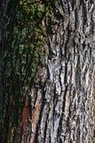Groen mos op de achtergrond van de grungeboom Stock Fotografie