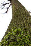 Groen mos op de boomboomstam Royalty-vrije Stock Afbeelding