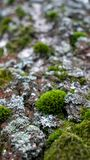 Groen mos op de oude boom in de lentebos royalty-vrije stock foto