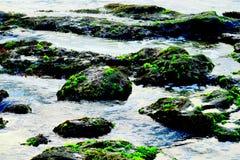 Groen mos op de rotsen van een strand royalty-vrije stock foto