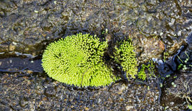 Groen mos op de staaf Stock Foto's