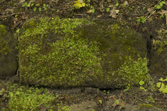 Groen mos op de steen bij het bos stock fotografie