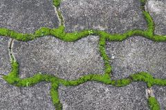 groen mos op de stoeptegel in het park Stock Foto