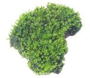 Groen mos op grijze achtergrond, het knippen weg stock afbeelding