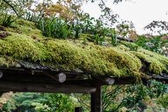 Groen mos op houten dakbovenkant royalty-vrije stock foto's