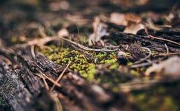 Groen mos op oude stomp dichte omhooggaand stock afbeeldingen