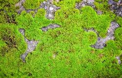 Groen mos op rots Stock Afbeelding