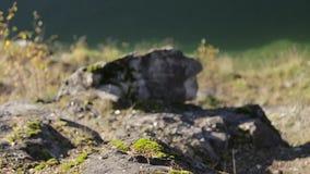 Groen mos op rotsen stock videobeelden
