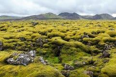 Groen mos op vulkanische rotsen ijsland Stock Afbeelding