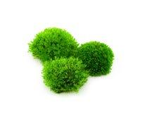 Groen mos op witte achtergrond stock foto