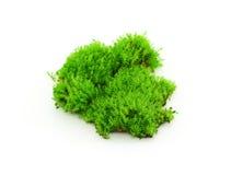 Groen mos op witte achtergrond royalty-vrije stock afbeeldingen