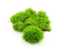 Groen mos op witte achtergrond stock fotografie