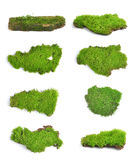 Groen mos op witte bakground stock foto's