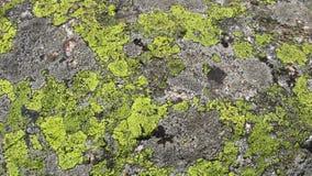 Groen Mos Textuur Stock Afbeeldingen