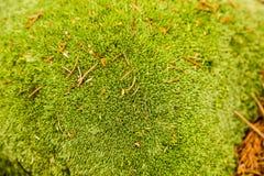 Groen mosclose-up in de zomerbos royalty-vrije stock afbeeldingen