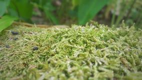 Groen mosclose-up Wilde installaties stock foto's