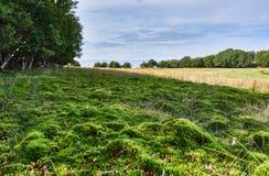 Groen mosgebied Stock Afbeelding