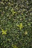 Groen muurhoogtepunt van installaties en bloemen stock foto