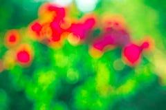 Groen nam Bokeh-achtergrond, Abstracte achtergronden toe Vaag niemand, Royalty-vrije Stock Foto