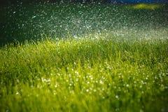 Groen nat gras Stock Afbeelding