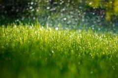 Groen nat gras Stock Fotografie