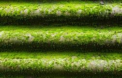 Groen nat mos Royalty-vrije Stock Afbeeldingen