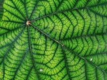 Groen netwerk royalty-vrije stock afbeelding
