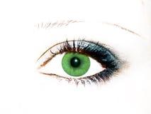 Groen oog royalty-vrije stock foto